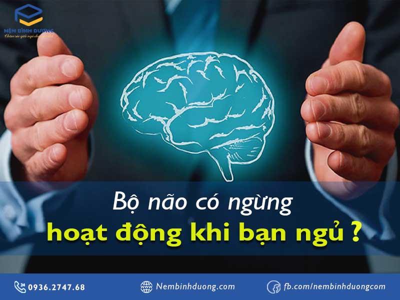 Bộ não có ngừng hoạt động khi bạn ngủ? Nệm Bình Dương